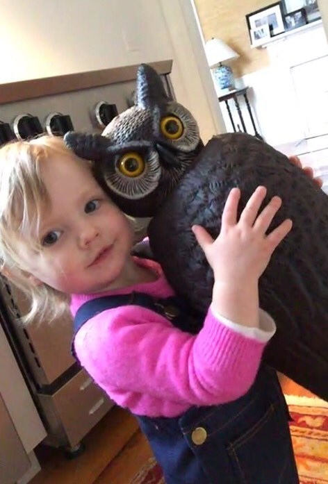 Meet Sylvie, a 1½-year-old from the Boston area, and Whootie, her beloved owl statue.