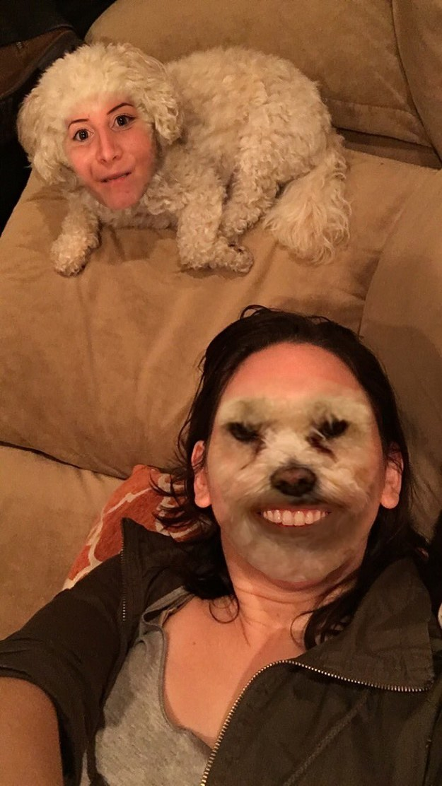 People have face swapped with their pets...