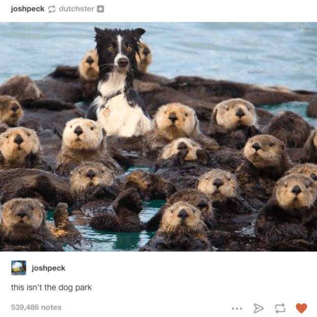 Otter space:
