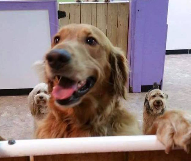 A dog in North Carolina loves his daycare so much that he escaped his home to go to it and play with his friends.