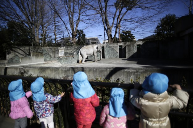 Hanako, an Asian elephant, arrived at the Inokashira Park Zoo in Tokyo in 1949 when she was just 2 years old as a gift from Thailand's government. For 67 years she lived alone in captivity in a sparse concrete enclosure.