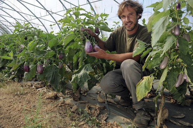 Eggplants grow on low plants and are technically berries (wtf).