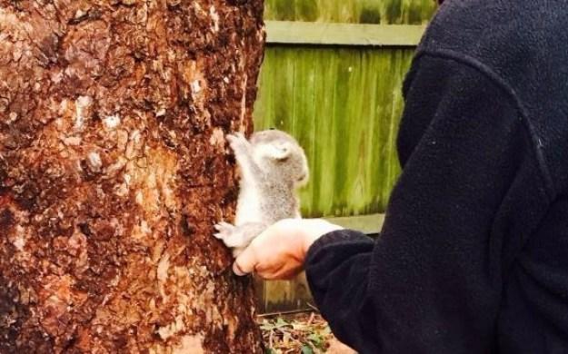 HELLO GOOD SIR. DO YOU NEED SOME HELP CLIMBING THE TREE?
