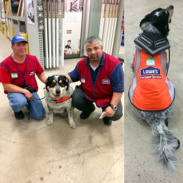 The store recently hired Owen, who suffered a brain injury when he was a teenager. And along with Owen came Blue, his support dog.