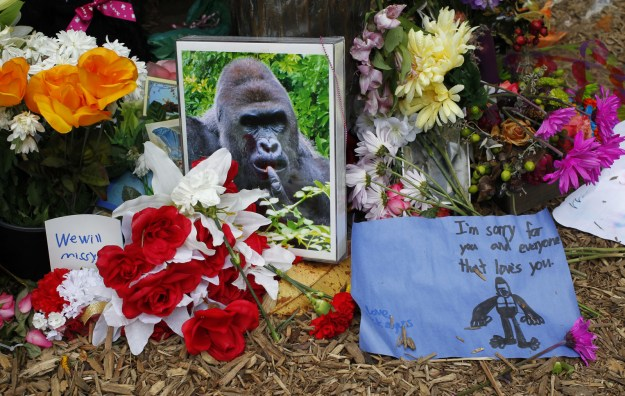 Because the story was in the news for so long (even Donald Trump had thoughts!!), Harambe eventually became something of a ~meme~ online.