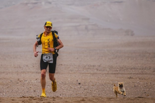 Earlier this month, the world fell in love with Gobi, a stray dog in China who ran 22 miles next to a marathoner named Dion Leonard.