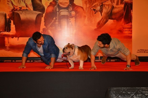 Look closely at this photo of Dhawan and Abraham doing push-ups next to Maximus.