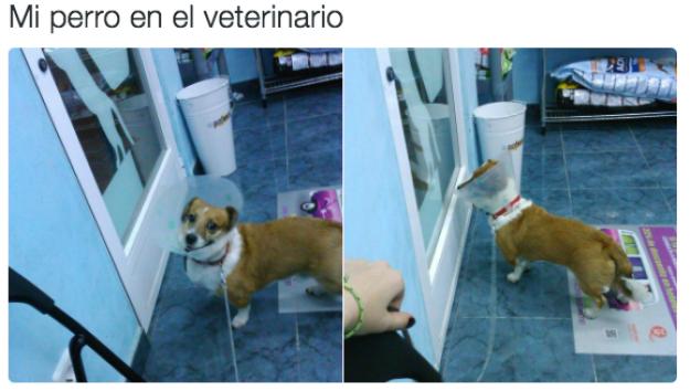 Este otro perrito que ha encontrado la puerta.