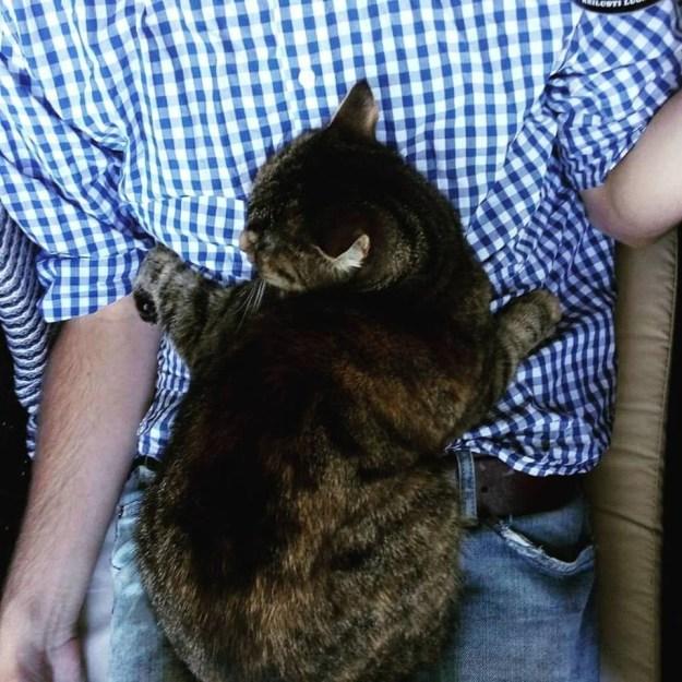 A macskák csak azt, hogy közel legyen az emberek imádnak.