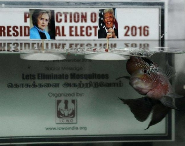 Chanakya III the Chennai Fish: Donald Trump Wins!