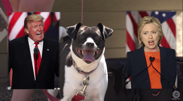 Cleveland Dogs: Donald Trump Wins!