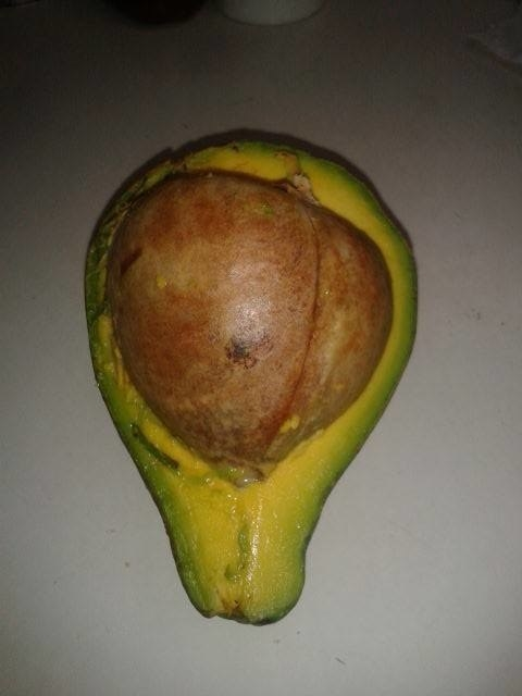 2016 is this avocado: