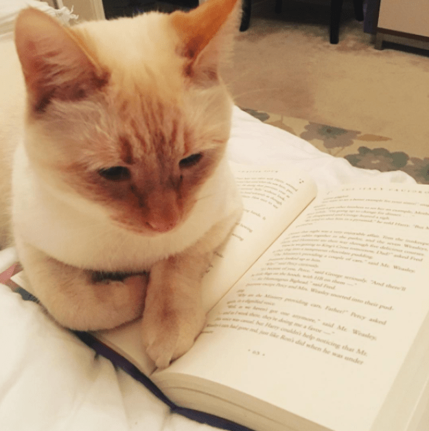 """This bookworm of a cat who's like, """"What do you mean you lost your place?"""""""