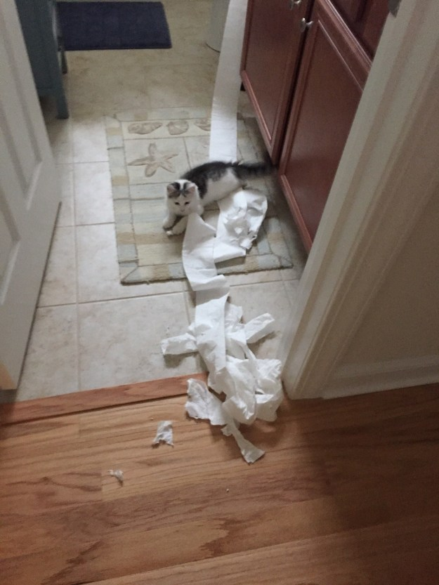 """This cat who's like, """"You can go ahead and add toilet paper to your grocery shopping list, thanks."""""""