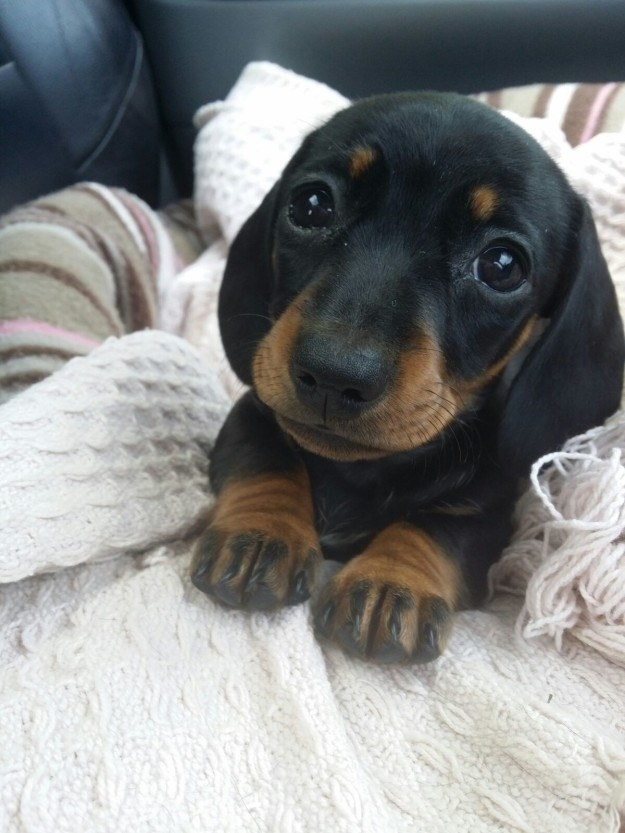 29 puppies who are
