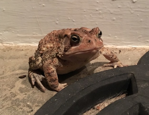 This is Mr. Toad.