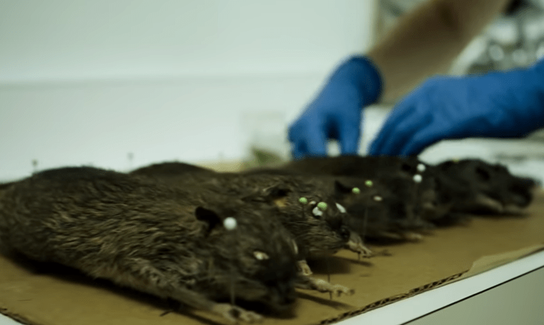 Directed by Morgan Spurlock, Rats chronicles rat infestations around the world and details their success as a species. Be warned though, this does include graphic scenes of rats being killed. – Suggested by Catoya Lundy, Facebook