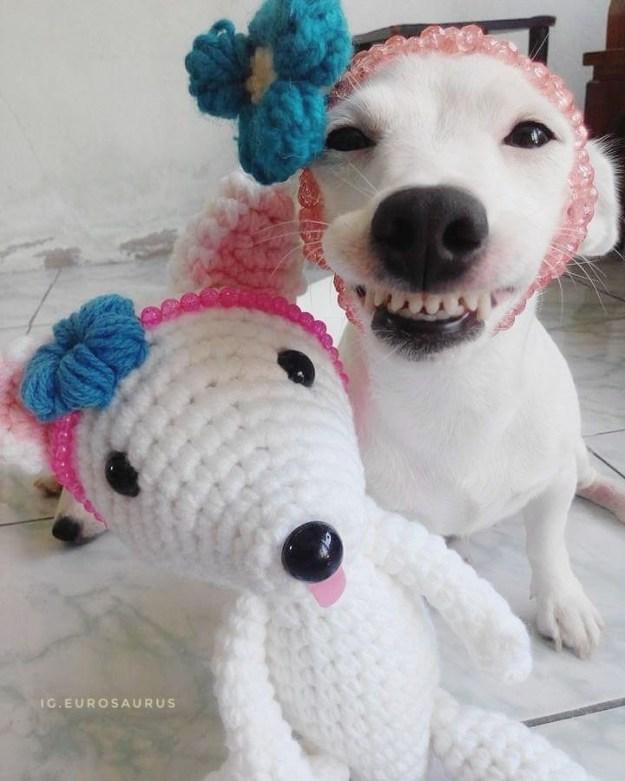 チャームポイントは、このステキな笑顔。カメラに向かって、前歯をキラッ!と見せるのがユーロちゃん流です。