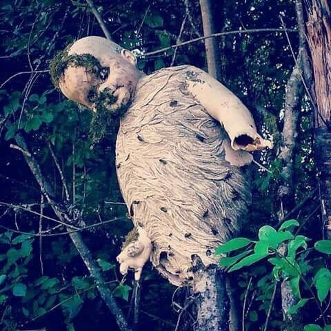 HOLY CRAP, some wasps built a nest around this old doll.