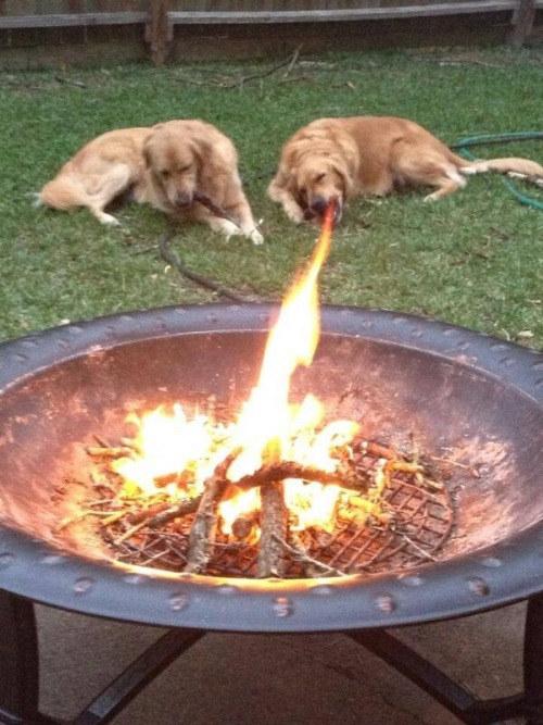 This doggo cannot breathe fire.