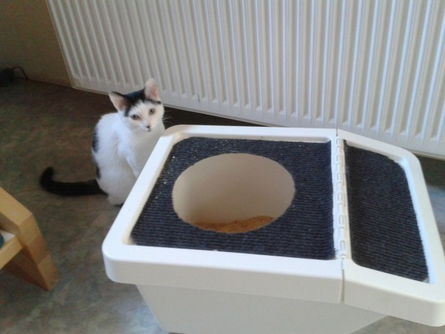 This compact cat toilet.