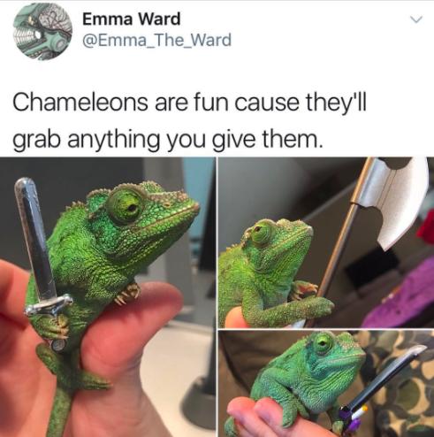 Chameleon fun: