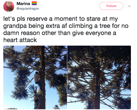 This grandpa, who climbed a tree just to give everyone a heart attack: