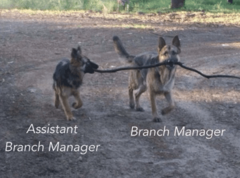 These bark, er, bank employees.