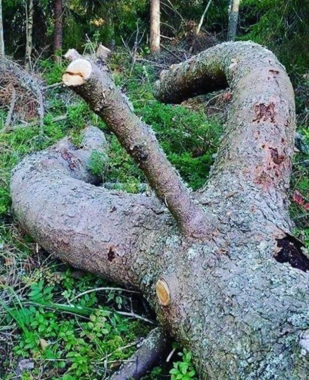 This tree hurts my eyes:
