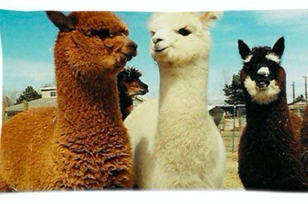 products for anyone who loves llamas