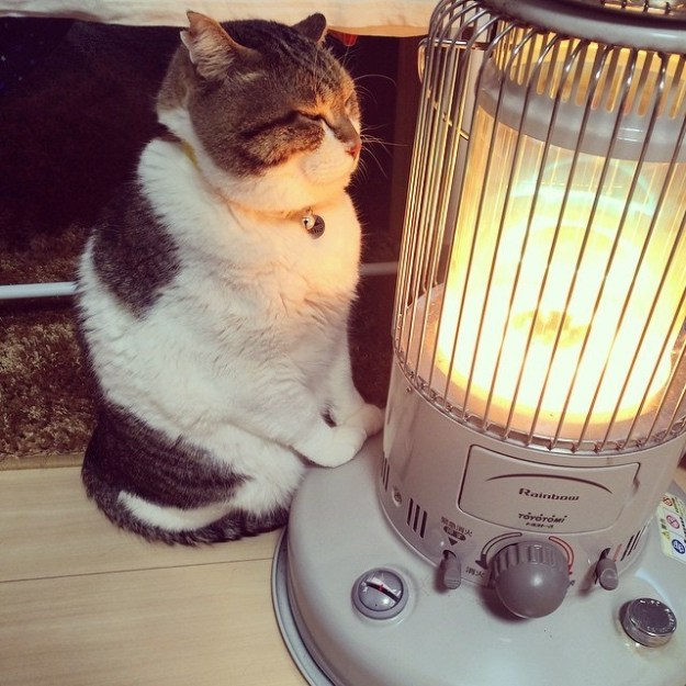 Meet Busao-san: a cat living in Japan who is doing winter right: