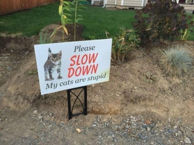 This cat is you when someone gives you too much responsibility: