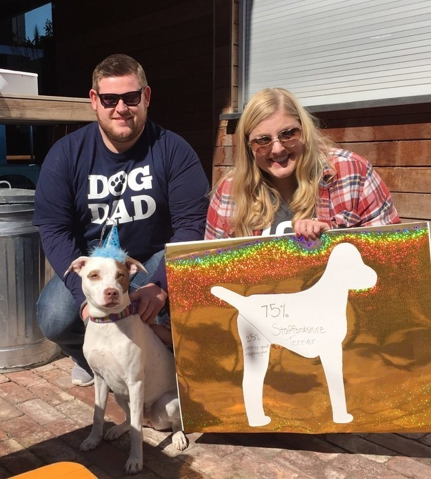 "These dog parents threw a ""breed reveal party"" when they got their pup's DNA test back."