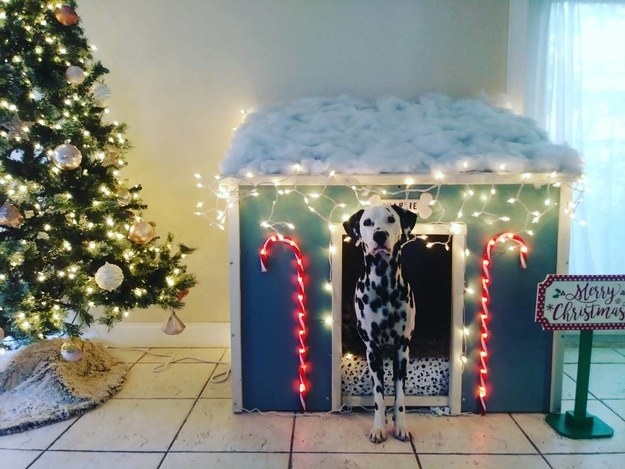 This dog owner had a house built for Charlie and decked it out at Christmas time.