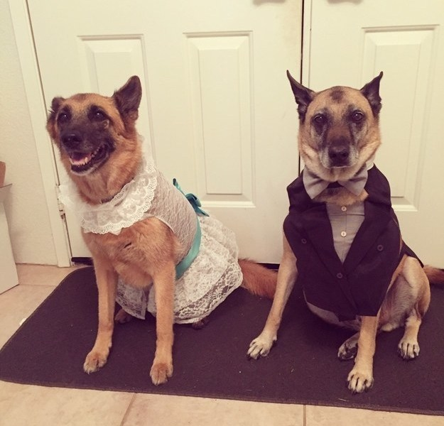 "And these two dogs got dressed up for their owner's ""I dos"" — wedding colors and all!"