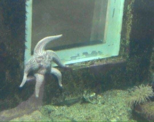 Me as a starfish: