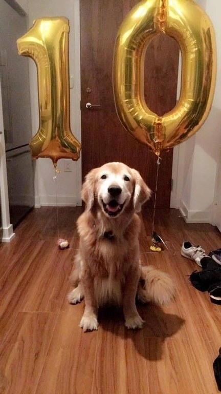 HAPP 10TH BIRTHDAY, GOLDEN BOYE!