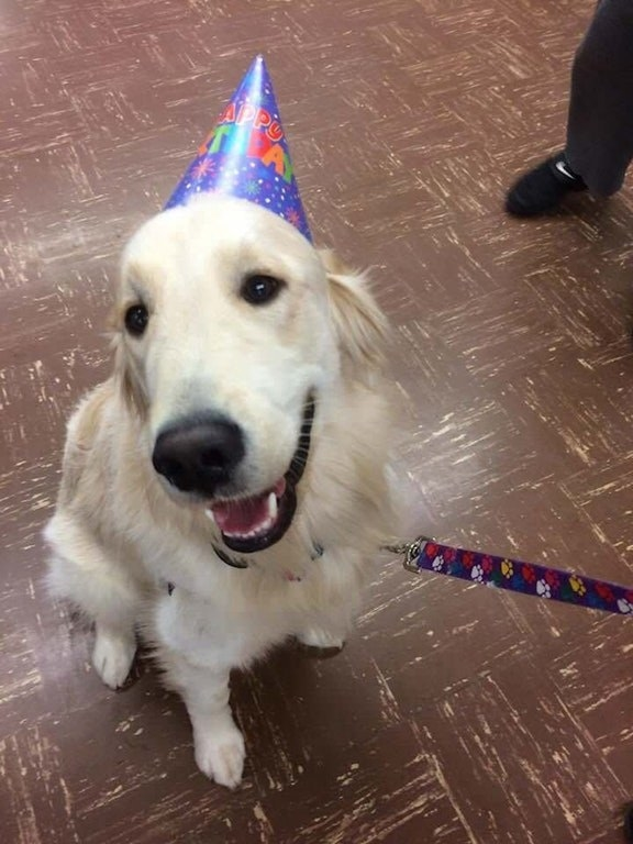 A school threw their therapy dog a birthday party!!! I gasped!