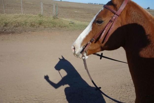 Bojack Horseman: The live motion picture