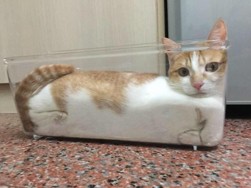 gatos en contenedor