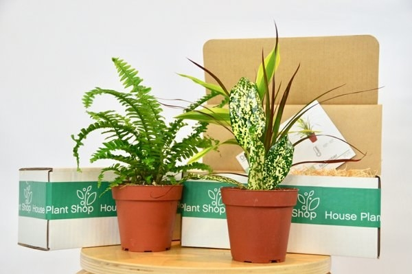 What you'll get: Each month you'll receive a custom-crafted selection of lovely house plants as well as other great surprises such as plant fertilizer, planters, and display stands.Get it from Cratejoy for $11.25+/month.
