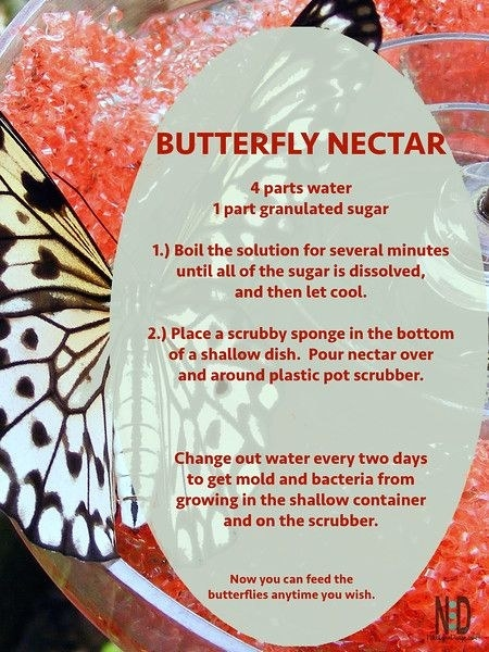 Here are a few alternatives for butterfly nectar and mash as well.