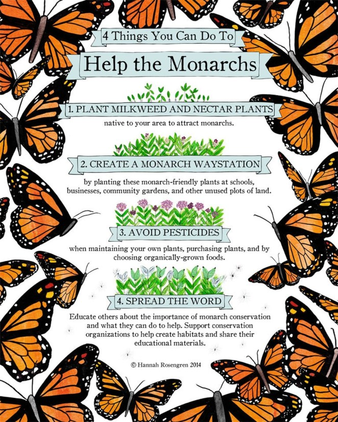 Monarch butterflies will only lay their eggs on milkweed. You'll want to plant a local, native variety and research the best place in your town to get it in order to avoid plants grown with a neonicotinoid pesticide, which are harmful for bees. (Fun fact: Lowe's has resolved to phase out neonicotinoids by 2019.) There are also many types of milkweed, and only certain ones will attract monarchs. Read more about it here.Bees are very fond of milkweed as well.