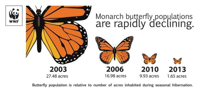 According to Nature.org, migrating Western monarch butterflies declined 85 percent from 2017 to 2018. There are 28,429 monarchs collecting on the Pacific coast, which is down from about 4.5 million in the 1980s.There are three main reasons: severe weather, illegal deforestation, and the rise of industrialized agriculture in the Midwest.
