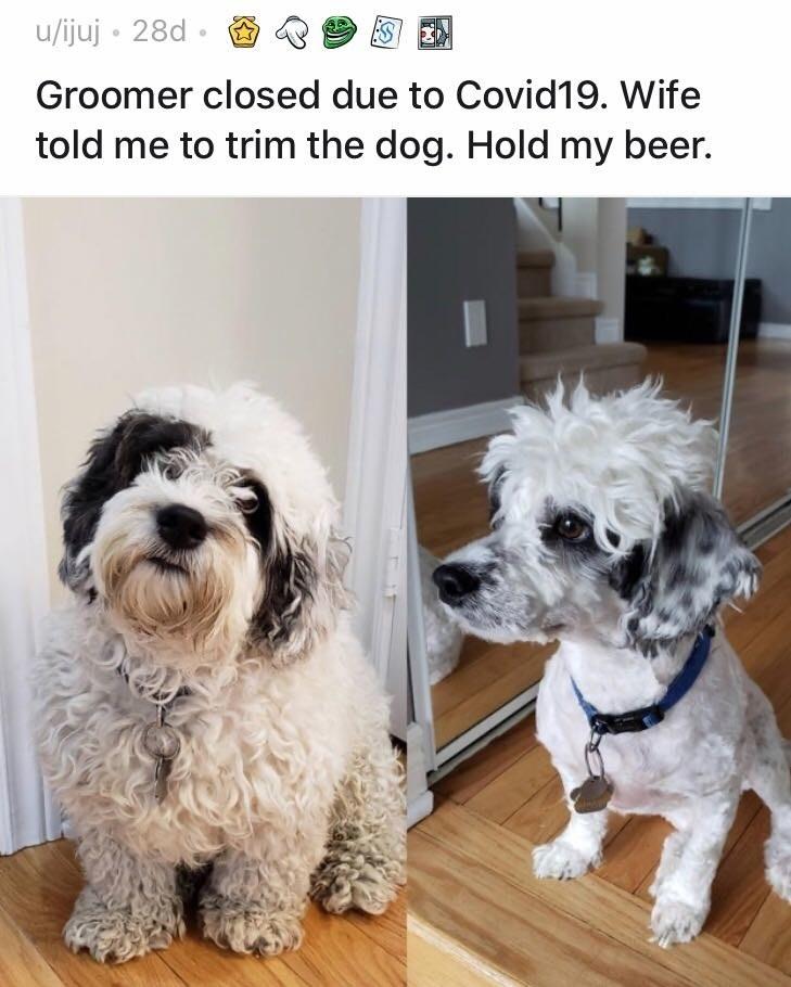 Lion Hair Cut For Dogs : Quarantine, Haircut