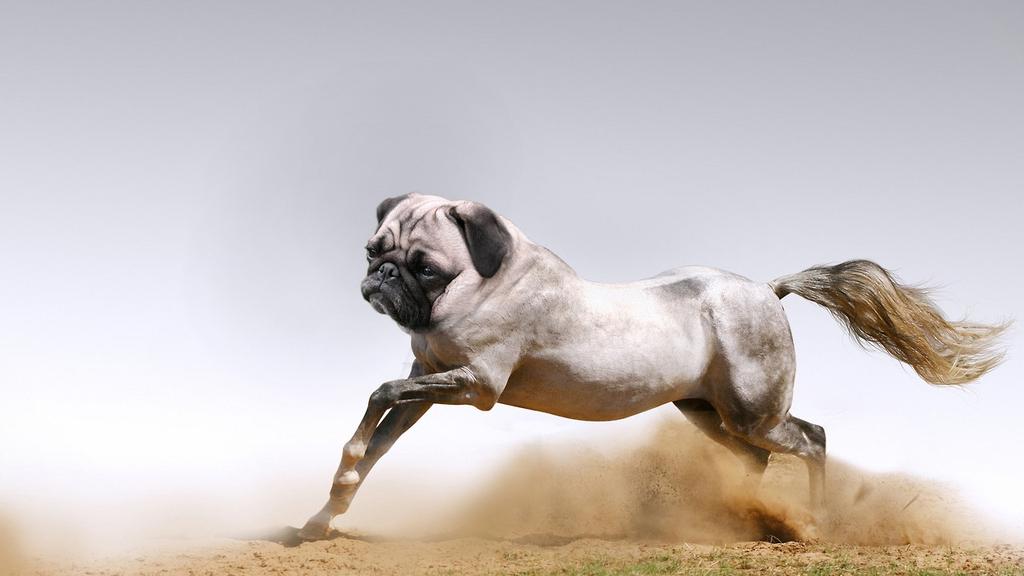 The 7 Creepiest HorseAnimal Hybrids
