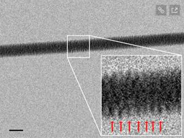 Using an electron microscope, Enzo di Fabrizio and his team at the Italian Institute of Technology in Genoa snapped the first photos of the famous double helix.
