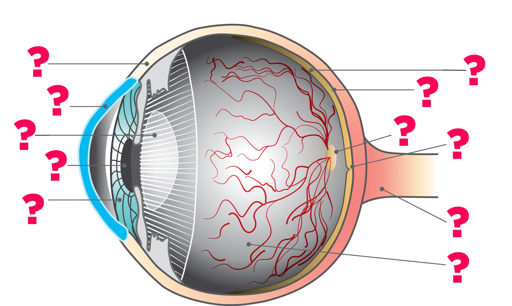 small resolution of eye diagram for quiz wiring diagram read eye diagram quiz game
