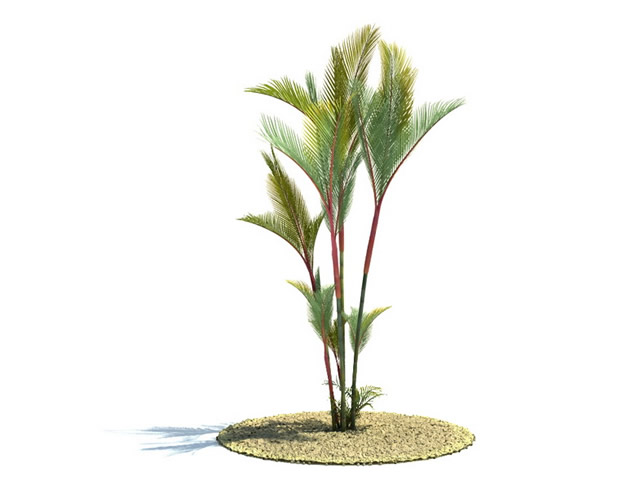 Cyrtostachys renda tree 3d model 3dsMax files free