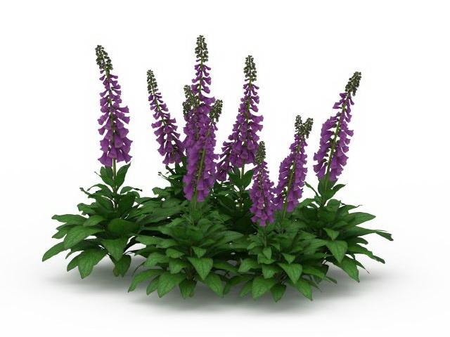 Salvia Divinorum Plants 3d Model 3ds Max Files Free Download Modeling 29716 On CadNav